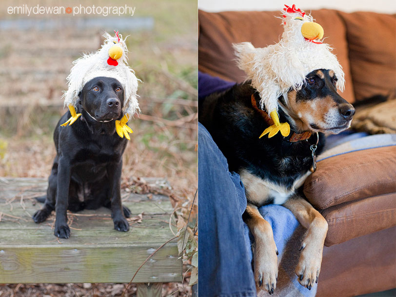 alternative holiday portrait chicken hat dog