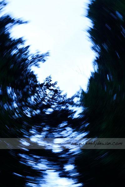 ithaca ny trees swirl