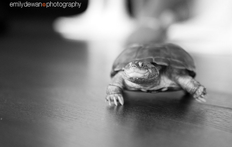 family turtle pet portrait nyc new york manhattan