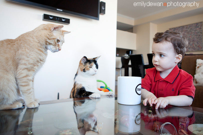 family kid child cat pet portrait nyc new york manhattan