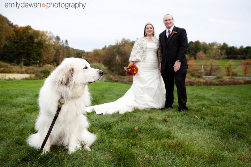 wedding barn at gibbet hill groton ma dog Great Pyrenees