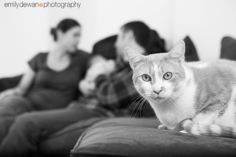 astoria queens family photographer newborn cats dogs pet nyc