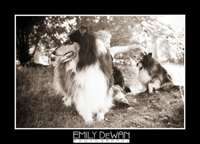 mini dogs 1