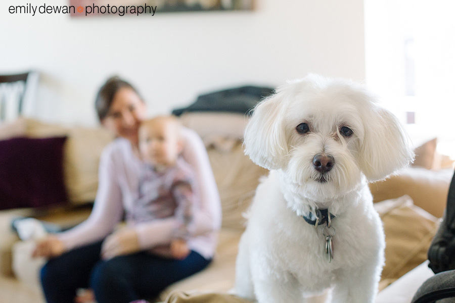 chelsea new york family portraits toddler havanese dog