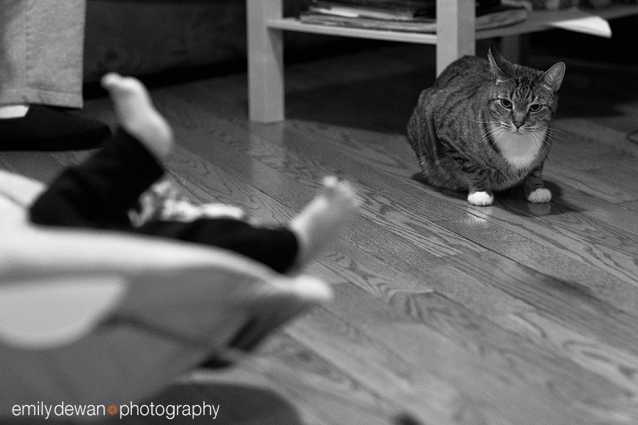 new york family cat photography