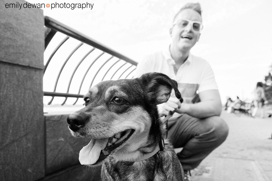 new york dog pet photography